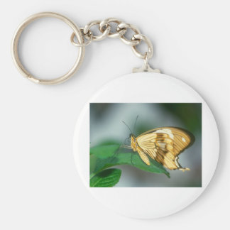 butterflies swallow tail butterfly basic round button key ring