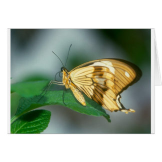 butterflies swallow tail butterfly greeting card