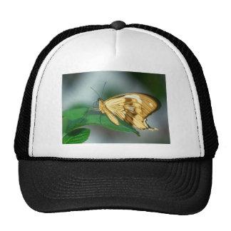 butterflies swallow tail butterfly trucker hats