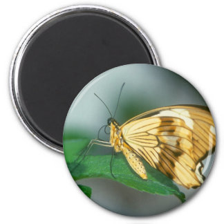 butterflies swallow tail butterfly 6 cm round magnet