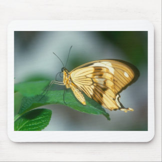 butterflies swallow tail butterfly mouse pad
