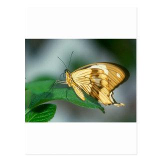 butterflies swallow tail butterfly postcard