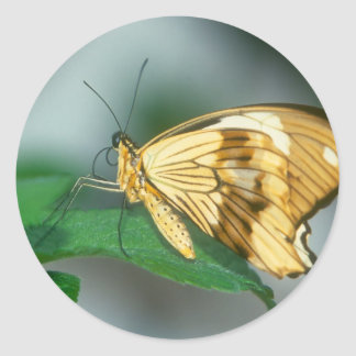 butterflies swallow tail butterfly round sticker