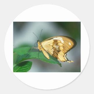 butterflies swallow tail butterfly round sticker