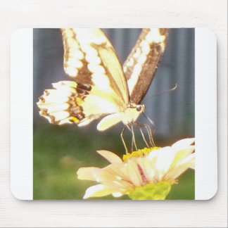 butterfliy love mouse pad
