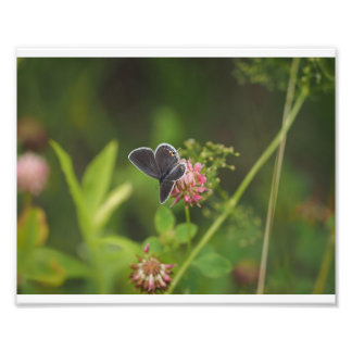 Butterfly 01 photo print