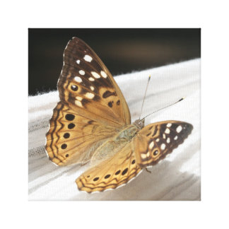 Butterfly 133 Macro Canvas Print