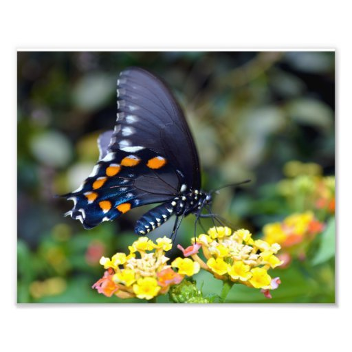 "Butterfly 8""x10"" Photo Print"