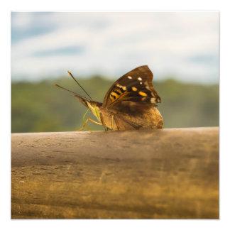 Butterfly against Blur Background at Iguazu Park Photo Print