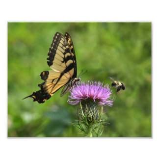 Butterfly and Bee 8x10 Print Photograph