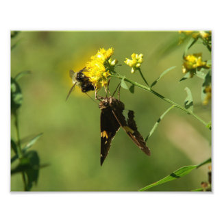 Butterfly and Bee, Photo Enlargement.