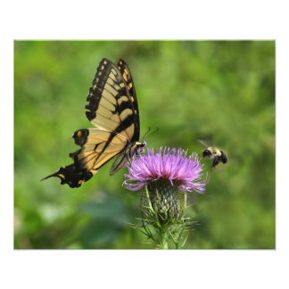 Butterfly and Bee Photo Print