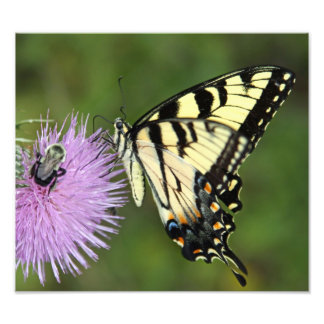 Butterfly and Bee Photographic Print