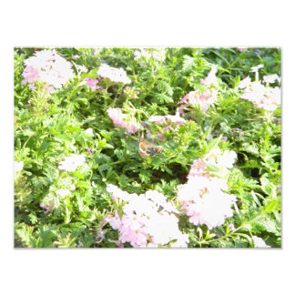 Butterfly and Flowers Photographic Print
