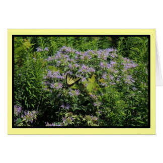 Butterfly and Monarda Notecard