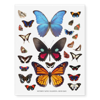 Butterfly and Moth Illustration