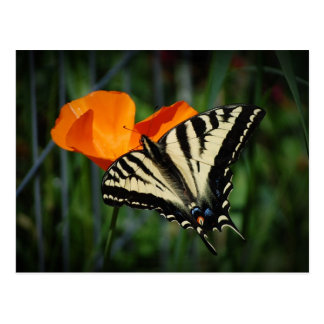 Butterfly And Orange California Poppy Postcard
