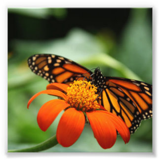 Butterfly and Orange Flower Photograph
