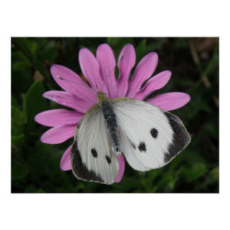 Butterfly and Pink Flower Print
