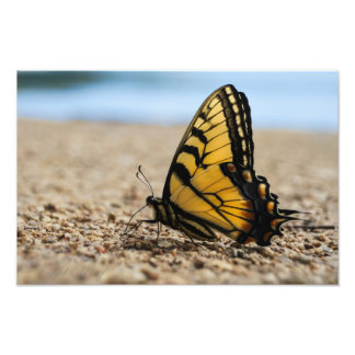 Butterfly at the Beach Photo