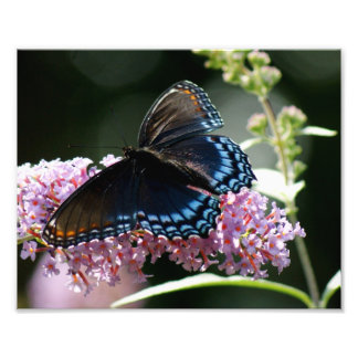 Butterfly Blue Photograph