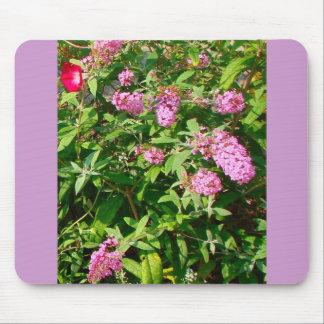 """butterfly bush"" mousepad w/ morning glory"