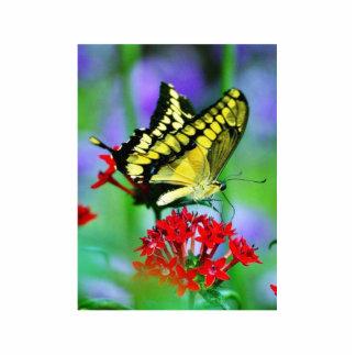 Butterfly Butterflies Wings Photo Cutout