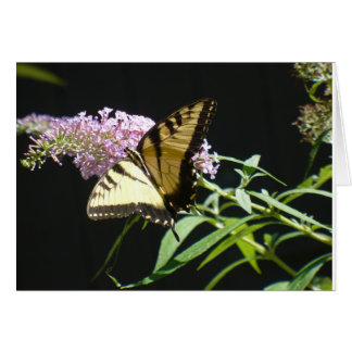 Butterfly Cad Note Card