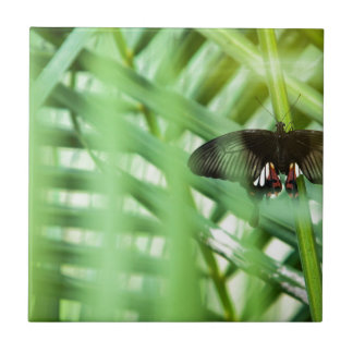 butterfly Cambodia Small Square Tile