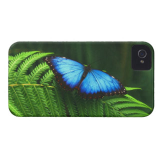 Butterfly iPhone 4 Cases