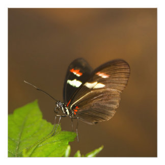 Butterfly - Close Up Art Photo