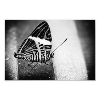 butterfly crossing photo print