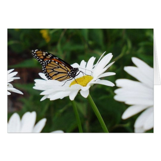 Butterfly Daisy Card