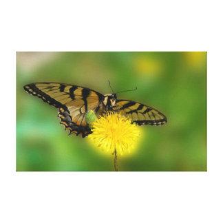 Butterfly Dandelion Gallery Wrap Canvas