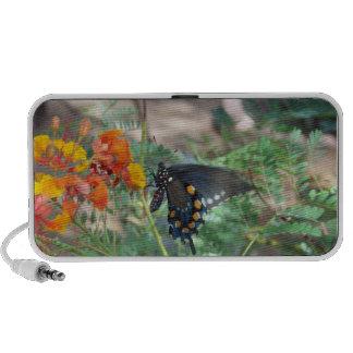 Butterfly Doodle Speaker