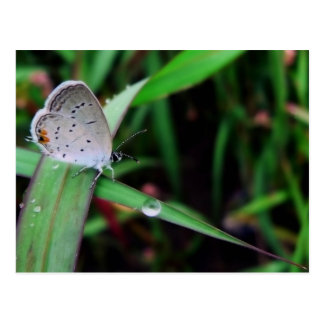 butterfly & drop @ nine mile run postcard