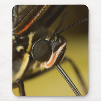 Butterfly Face Mouse Pad