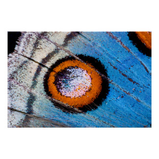 Butterfly false eye close up poster