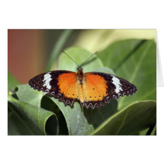 butterfly farm 2 card