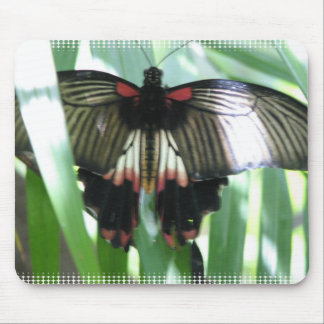 Butterfly Farm Mouse Pad
