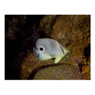 Butterfly fish at night post card