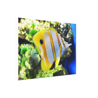 Butterfly fish gallery wrap canvas