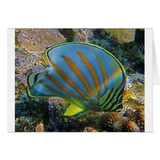 Butterfly Fish Greeting Card