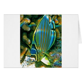 Butterfly Fish - Front facing Card