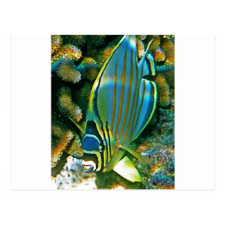 Butterfly Fish - Front facing Postcard