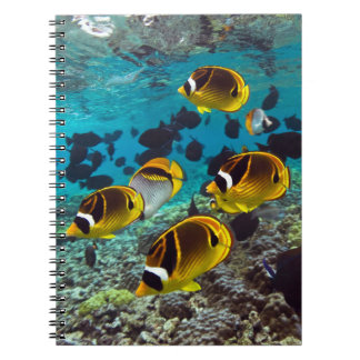 Butterfly fish note book