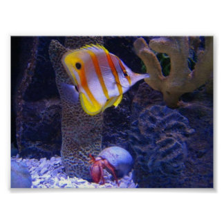 Butterfly Fish Photo Posters