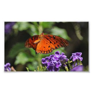 Butterfly Flower Print Photograph