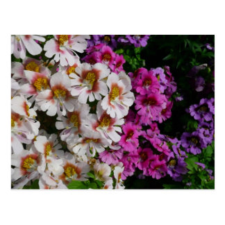 Butterfly Flowers Pink White and Purple Floral Postcard