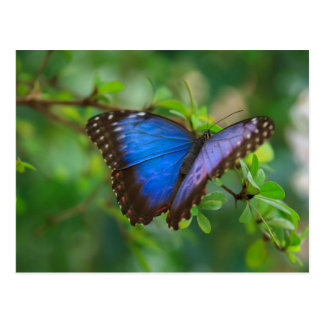 Butterfly Foto Auf Photo Postcard